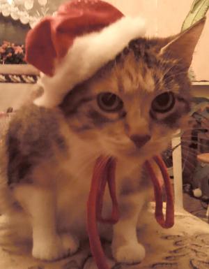 новогодний кот
